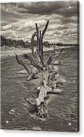 Desolate Acrylic Print by Marcia Colelli