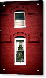 Doggie In The Window Acrylic Print by Laurie Perry
