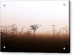 Dwarf Cypress Trees In Fog Acrylic Print by Jonathan Gewirtz