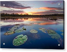 Everglades At Sunset Acrylic Print by Debra and Dave Vanderlaan