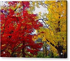 Fall Leaves Acrylic Print by Ariane Moshayedi