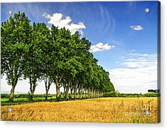 French Country Road Acrylic Print by Elena Elisseeva