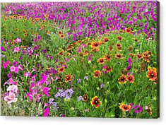 Garden Delight Acrylic Print by Lynn Bauer