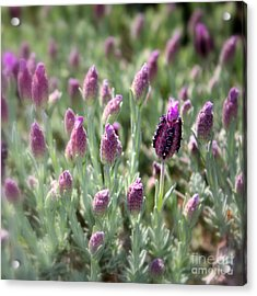 Lavender Standout Acrylic Print by Carol Groenen