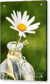 Love Me Love Me Not Acrylic Print by Darren Fisher