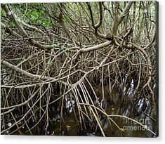 Mangrove Roots Acrylic Print by Tracy Knauer