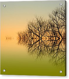 Olive Branches Acrylic Print by Sharon Lisa Clarke