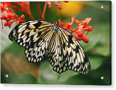 Paper Kite Butterfly Acrylic Print by Cindi Ressler
