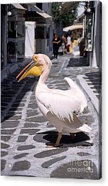 Pelican In Mykonos Town Acrylic Print by George Atsametakis