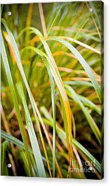 Plant Details Acrylic Print by Tim Hester