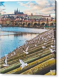 Prague Acrylic Print by Cory Dewald