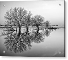 Reflection Acrylic Print by Tom Druin