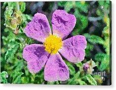 Rockrose Wild Flower Acrylic Print by George Atsametakis