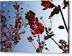 Shadows Acrylic Print by Lucy D