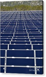 Solar Panels In Farm Acrylic Print by Sami Sarkis