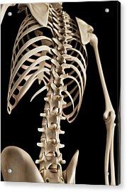 Spine Acrylic Print by Sebastian Kaulitzki