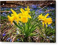 Spring Wildflowers Acrylic Print by Elena Elisseeva
