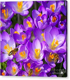 Springtime Acrylic Print by Angela Doelling AD DESIGN Photo and PhotoArt