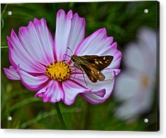 The Beauty Of Nature Acrylic Print by Frozen in Time Fine Art Photography