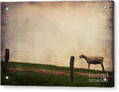 The Sheep Acrylic Print by Angela Doelling AD DESIGN Photo and PhotoArt