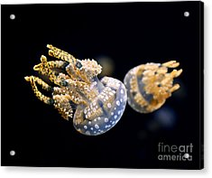 The Spotted Jelly Or Lagoon Jelly Mastigias Papua Acrylic Print by Jamie Pham