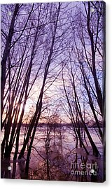 Trees In Water Acrylic Print by Michal Bednarek