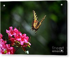 Up And Away Acrylic Print by Nava Thompson