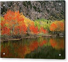 Usa, California, Sierra Nevada Acrylic Print by Christopher Talbot Frank