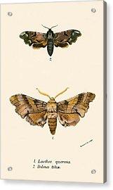 Butterflies Acrylic Print by English School