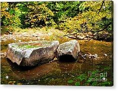 Fall Along Williams River Acrylic Print by Thomas R Fletcher