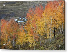 Usa, Colorado, Gunnison National Forest Acrylic Print by Jaynes Gallery