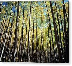 California, Sierra Nevada Mountains Acrylic Print by Christopher Talbot Frank