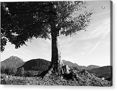 Alpine Tree Acrylic Print by Falko Follert