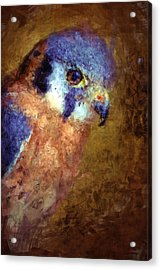 American Kestrel Falco Acrylic Print by Robert Jensen