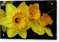 3 Blossoms In A Row Acrylic Print by Bruce Bley