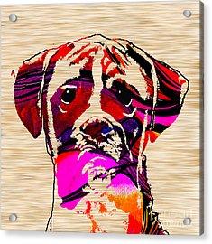 Boxer Acrylic Print by Marvin Blaine