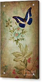 Butterfly Acrylic Print by Angela Doelling AD DESIGN Photo and PhotoArt