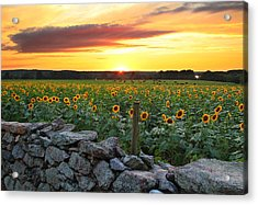 Buttonwood Farm Acrylic Print by Andrea Galiffi