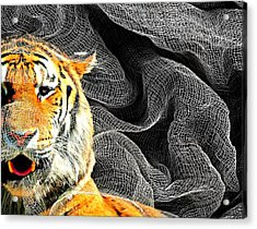Capture Acrylic Print by Diana Angstadt
