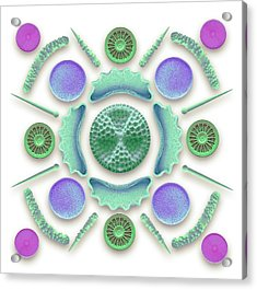 Diatoms And Sponge Spicules Acrylic Print by Steve Gschmeissner