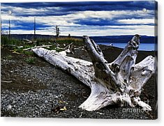 Driftwood On Beach Acrylic Print by Thomas R Fletcher