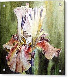 Iris Painting Acrylic Print by Irina Sztukowski
