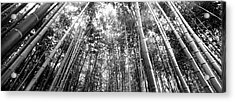 Low Angle View Of Bamboo Trees Acrylic Print by Panoramic Images