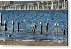 Ocean Springs To Biloxi Bridge Acrylic Print by David Bearden