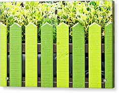 Picket Fence Acrylic Print by Tom Gowanlock