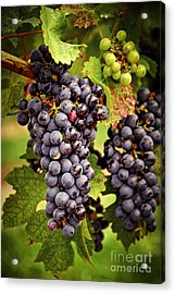 Red Grapes Acrylic Print by Elena Elisseeva