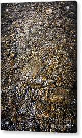 Rocks In Water Acrylic Print by Elena Elisseeva