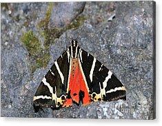 Valley Of Butterflies In Rhodes Island Acrylic Print by George Atsametakis