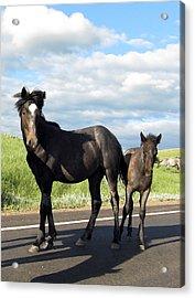 Wild Horses Acrylic Print by Patricia Januszkiewicz