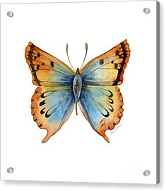 33 Opal Copper Butterfly Acrylic Print by Amy Kirkpatrick